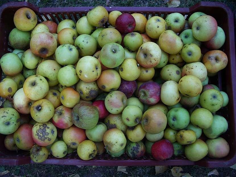Vytříděná jablka