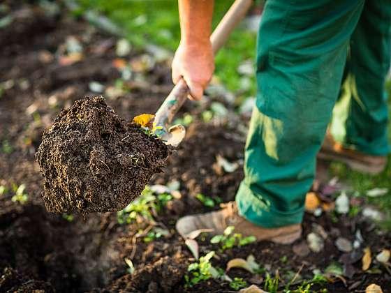 Rytí záhonu zásadně pomáhá v otázce zlepšení vlastností půdy (Zdroj: Depositphotos (https://cz.depositphotos.com))