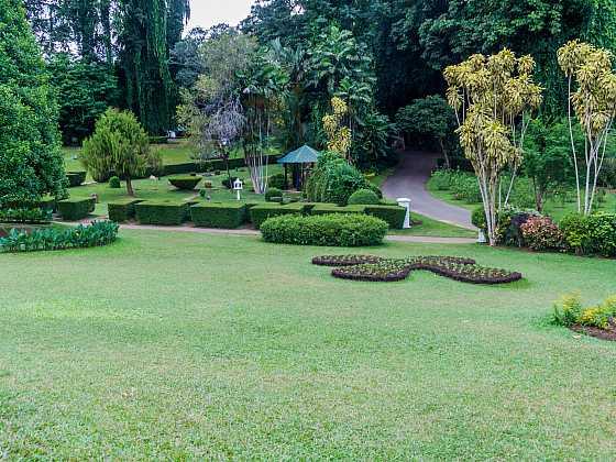 Rychle rostoucí stromy vám skvěle doplní zahradu (Zdroj: Depositphotos)