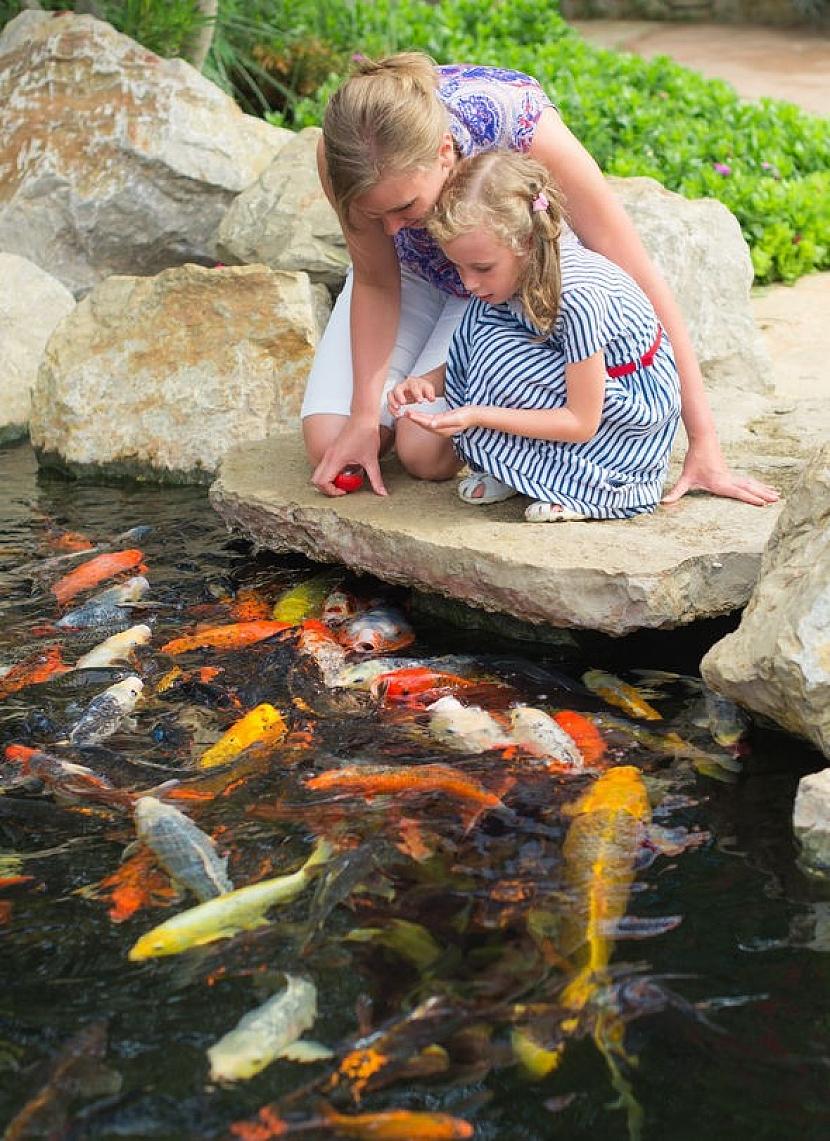 Kde si opatřit vhodné ryby do jezírka?