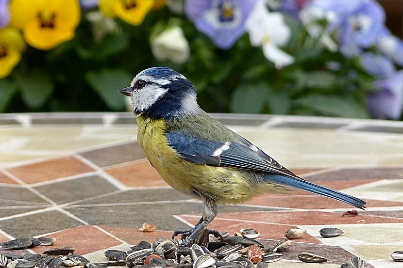 Zahrada jako ráj pro ptactvo