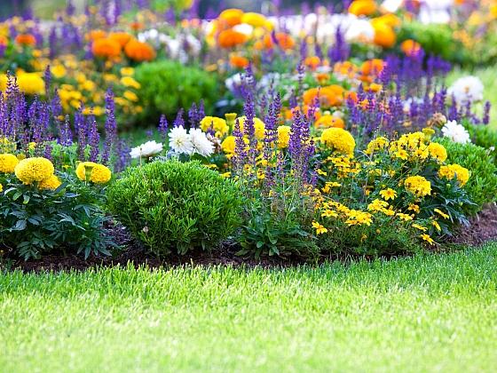 Záhon trvalek je ozdobou každé zahrady (Zdroj: Depositphotos)