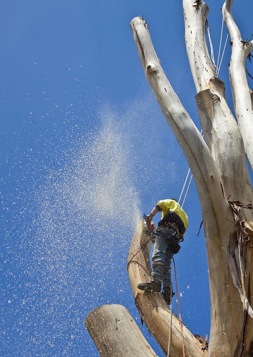 Tento strom je již uschlý a mohl by ohrozit obyvatele, je proto lepší jej odstranit