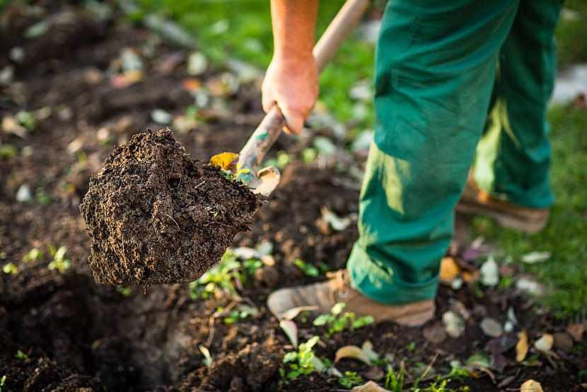 Každoroční rytí prospívá půdě i mikroorganismům v ní