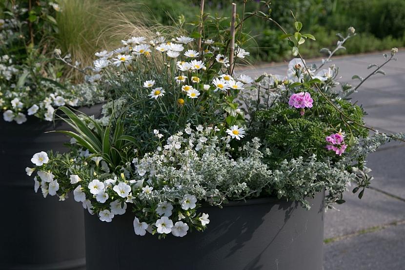 Rostliny v nádobě na předzahrádce