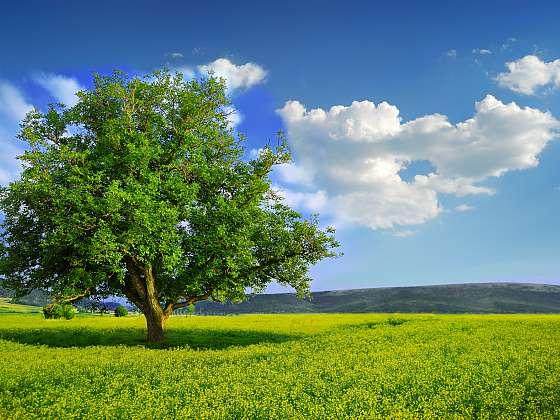 Někdy je potřeba přesadit i vzrostlé stromy (Zdroj: Depositphotos (https://cz.depositphotos.com))