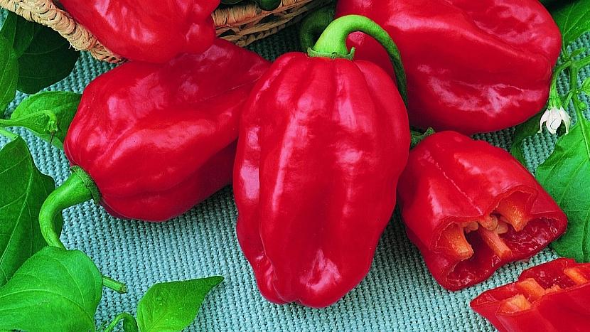 Paprička Habanero Red