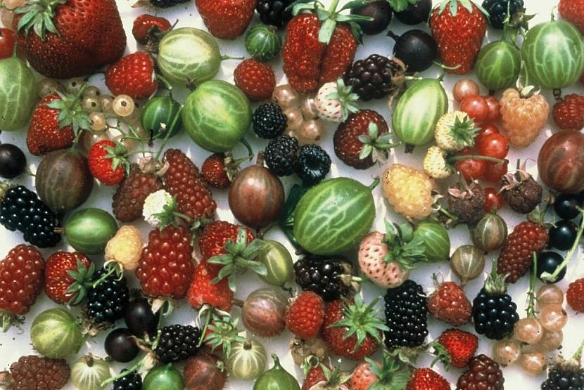 Zeleninové záhony a okrasné rostliny