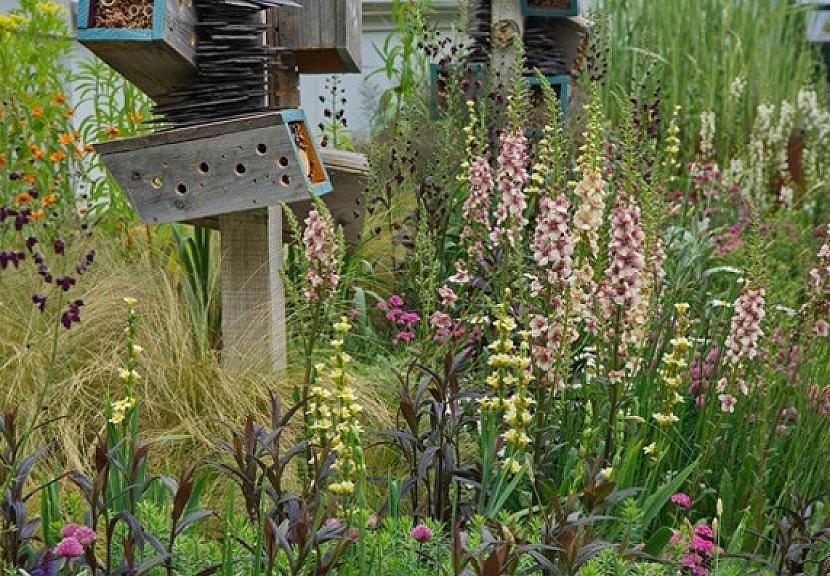 Nádherné rostliny: Trvalky a filigránové traviny