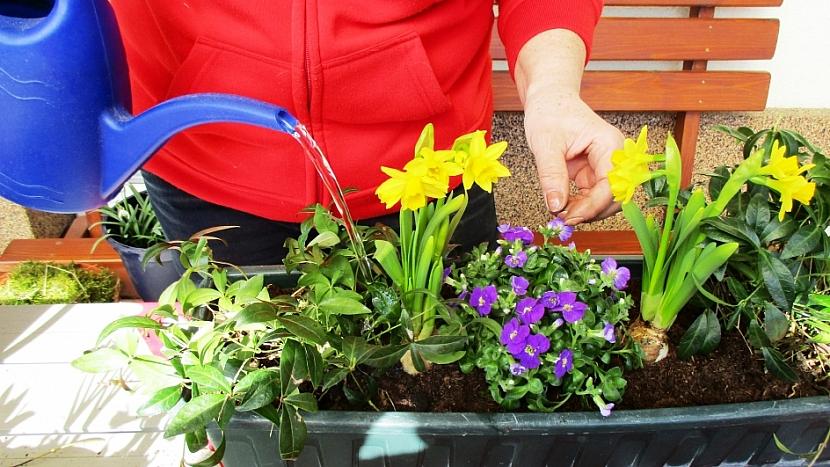 Jak si udělat svěží květinový truhlík aneb jaro je tady 10