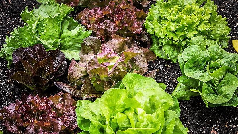 Snažte se střídat hlubokokořenící plodiny (petržel) smělce kořenícími (salát)