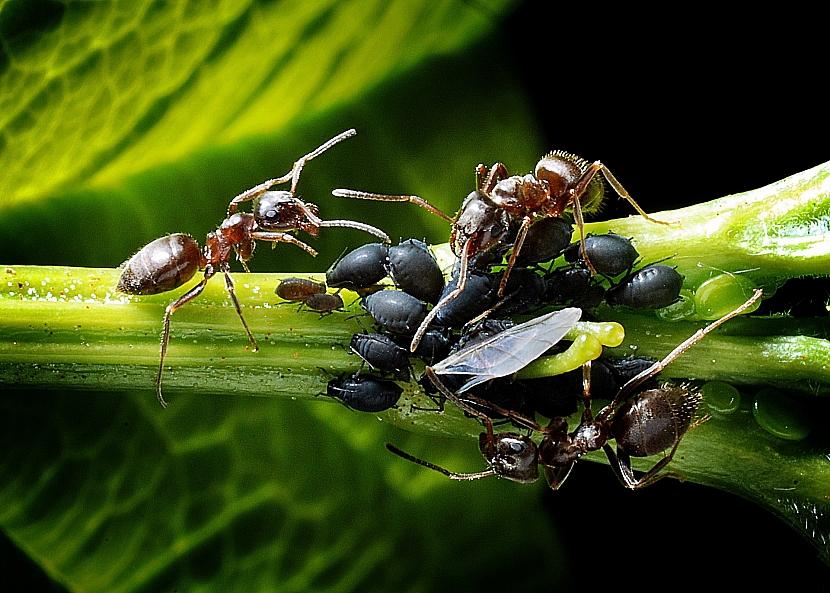 2_ants-1271768_1920