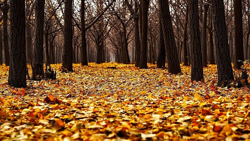 Listopad je druhým nejmlhavějším měsícem roku