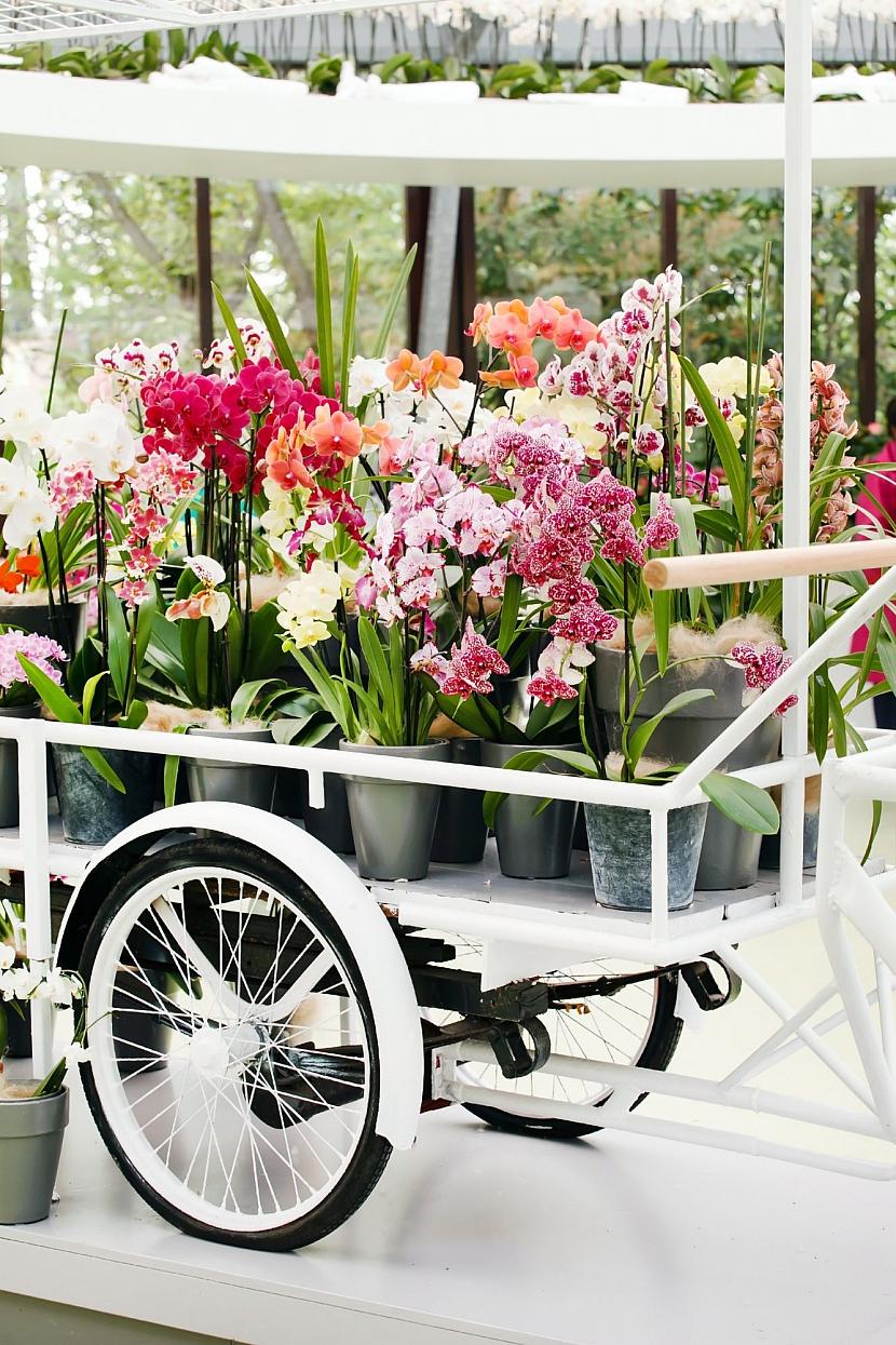 Různé orchidee