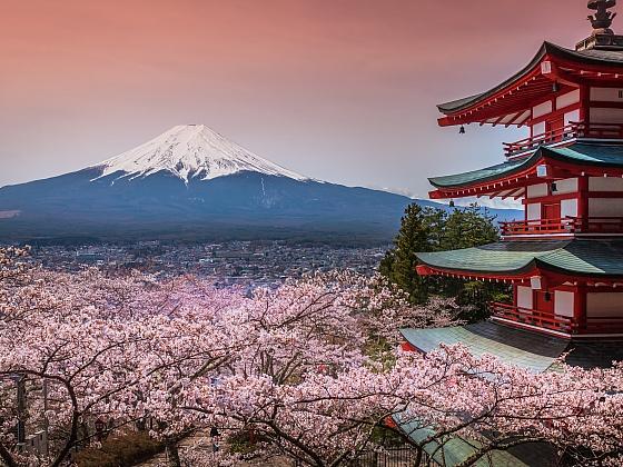 Sakura čili okrasná třešeň je skutečnou kráskou (Zdroj: Depositphotos)