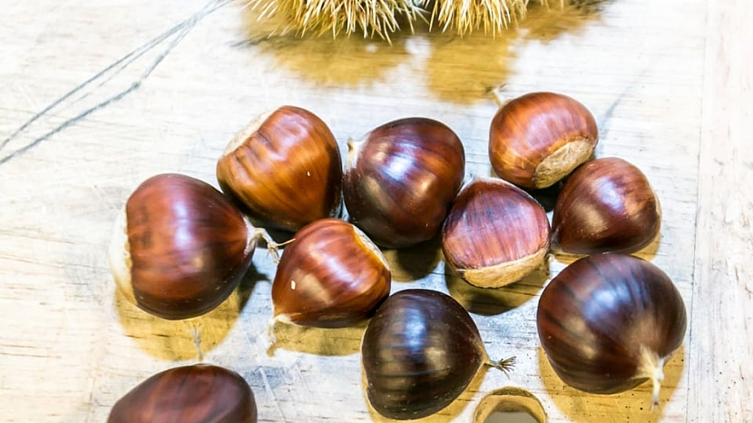 Plody kaštanovníku setého