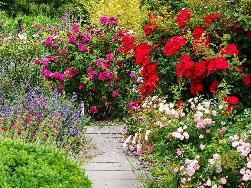 Trvalková výsadba v zahradě