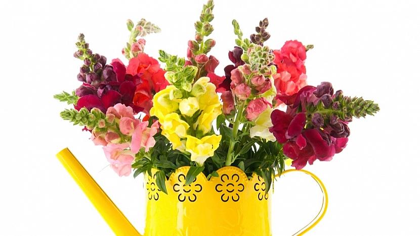 Hledíky: řezané květy vydrží ve váze svěží 9-12 dnů