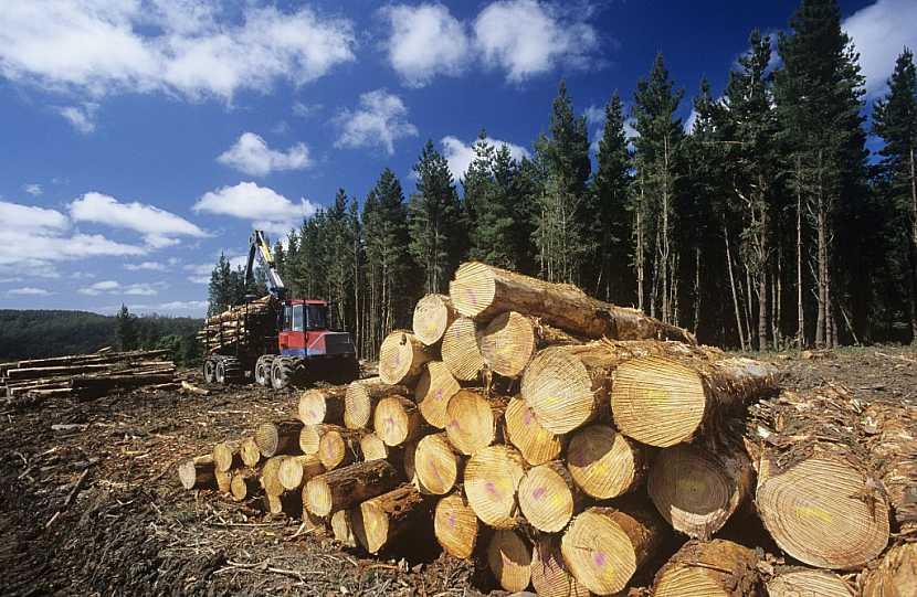 Stromy napadené kůrovcem se musí vytěžit, dokud jsou v dobré kondici