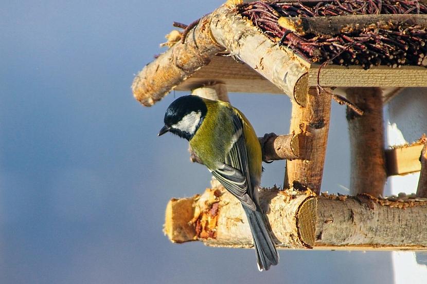 Ptačí krmítko by mělo mít stříšku, která dostatečně ochrání potravu před sněhem a deštěm. Zabrání vlhnutí a plesnivění potravy. (foto: pixabay.com)