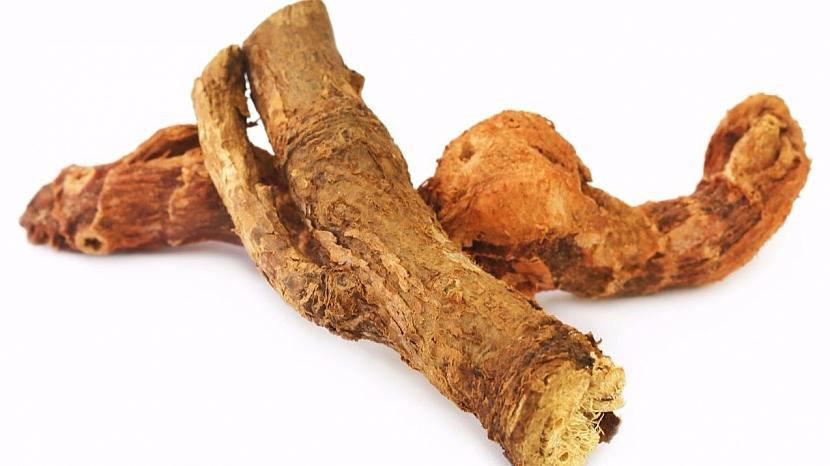 Skrytá řeč rostlin: puškvorcový kořen připomíná lidské střevo