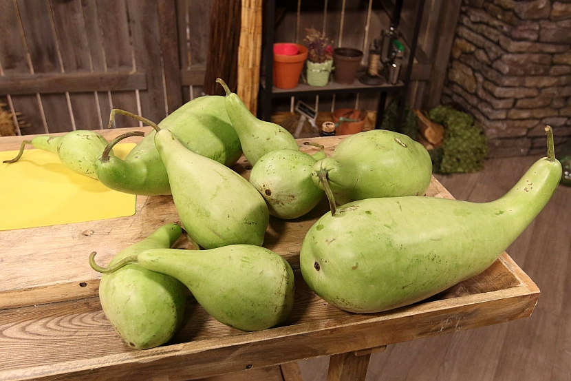 Plody lagenárie