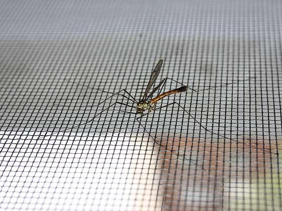 Chraňte se proti hmyzu sítí do oken (Zdroj: Depositphotos (https://cz.depositphotos.com))