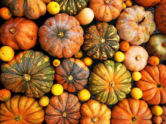Tykve v celé své pestré paletě tvarů a barev jsou velmi dekorativní (Zdroj: Depositphotos)