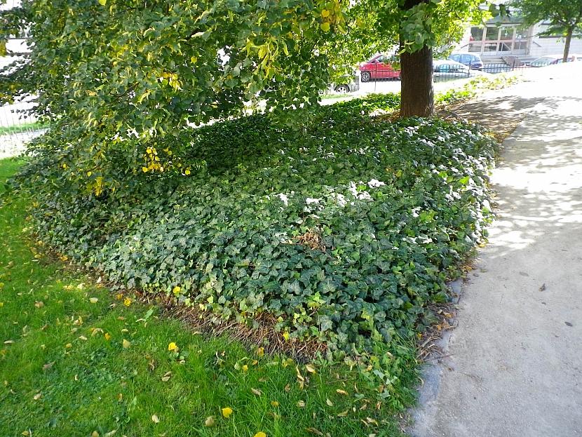 Rostliny pod stromem