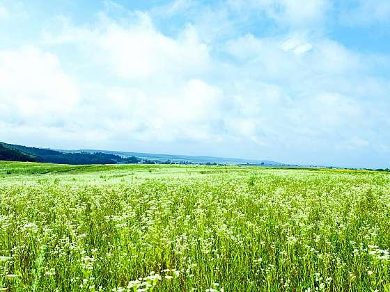 Letní louka láká k romantickým procházkám, představuje ale i otázku, kam s posekanou trávou (Zdroj: Depositphotos)