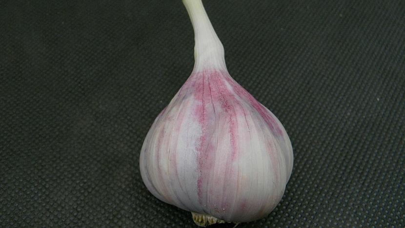 Jarní výsadba česneku: úzkolistý nepaličák Matin