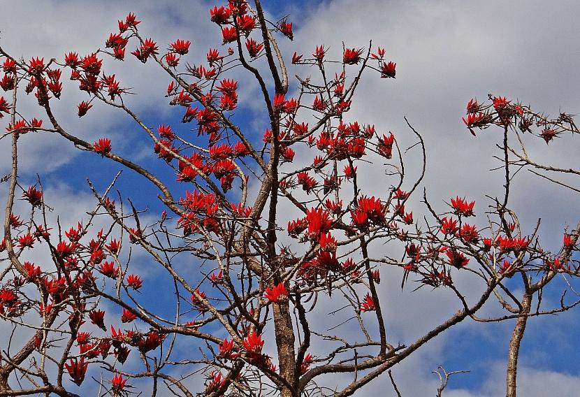 Stromy s nejkrásnějšími květy: Exotická krása rozkvetlých stromů 2