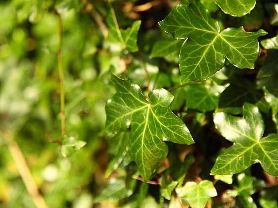 Zelená není jen tráva (Zdroj: Depositphotos)