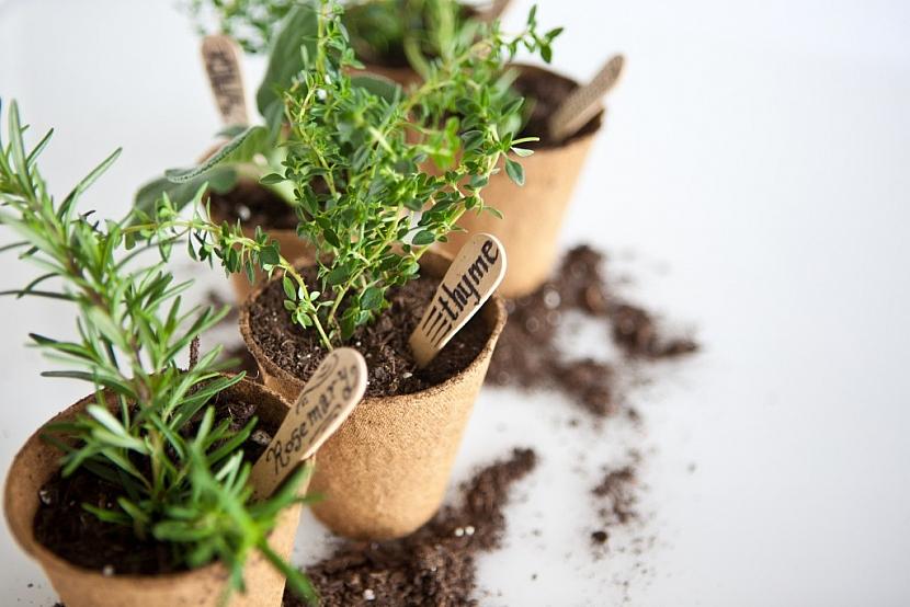 Rašelinový zakořeňovač, který se po zasazení rostliny rozpustí v půdě