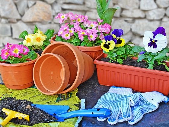 Výběr vhodné nádoby na pěstování rostlin