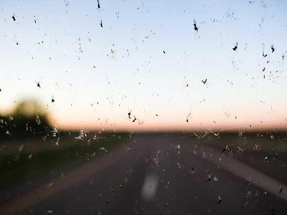 Jak na čistá skla, aneb hmyz nepřítel řidiče (Zdroj: Depositphotos)