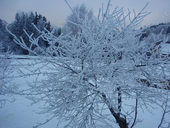 Mrazové poškození  a trhliny na kmenech stromů nepodceňujme (Zdroj: Jan Kopřiva)