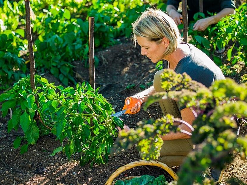 Užitkové rostliny vyséváme i v létě