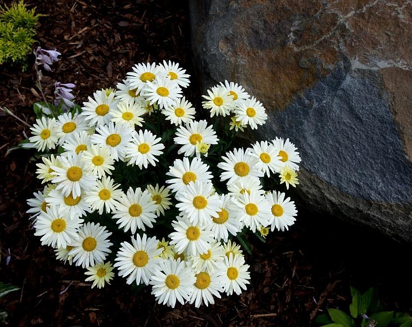 """Nemusíte se snažit pěstovat pouze vzácné a exotické rostliny. I """"obyčejný"""" rmen skalku dokáže nádherně rozjasnit."""