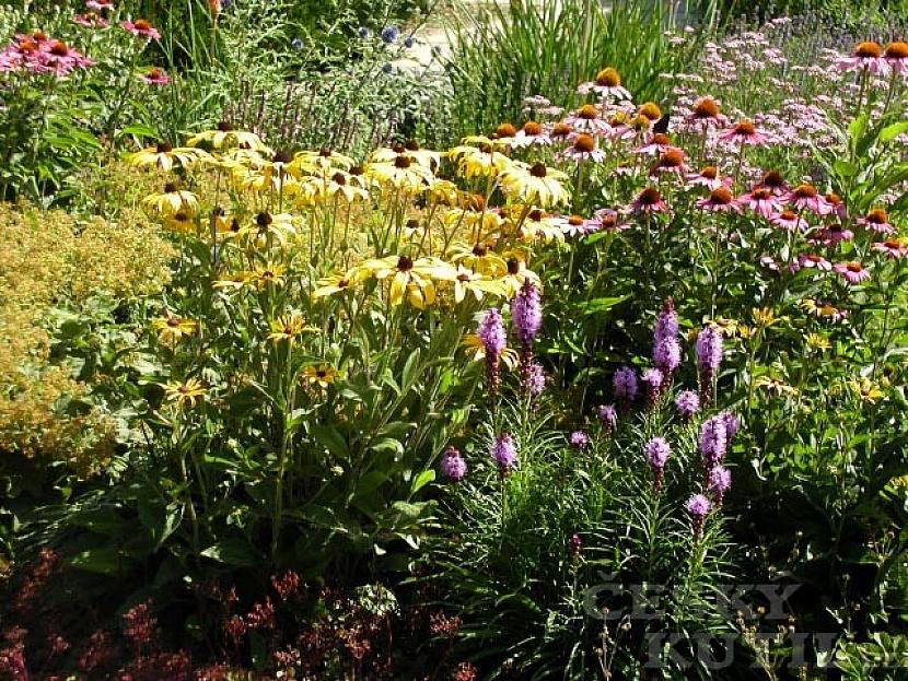 Červenec na zahradě