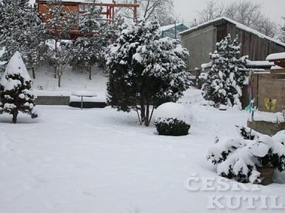 Sněhový kabát stromy netěší