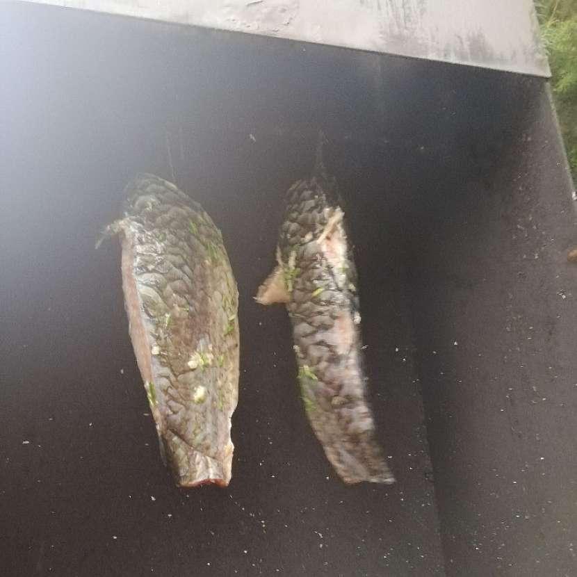 Zavěšení ryb