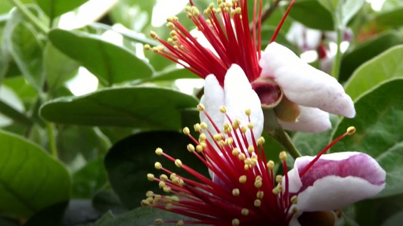 Atraktivní květy