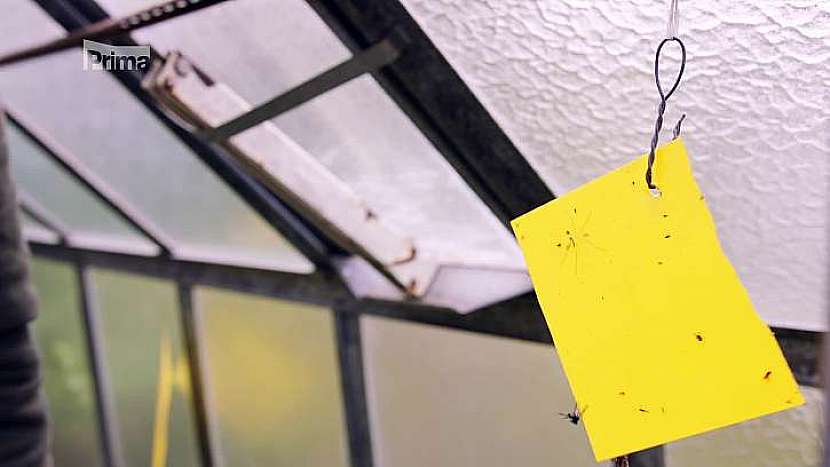 Žluté lepivé desky