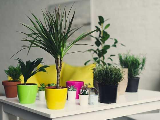 Pět největších chyb při pěstování pokojových rostlin (Zdroj: Depositphotos)