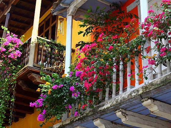 Vděčnou květinou na balkóny jsou převislé pelargonie (Zdroj: Depositphotos.com)