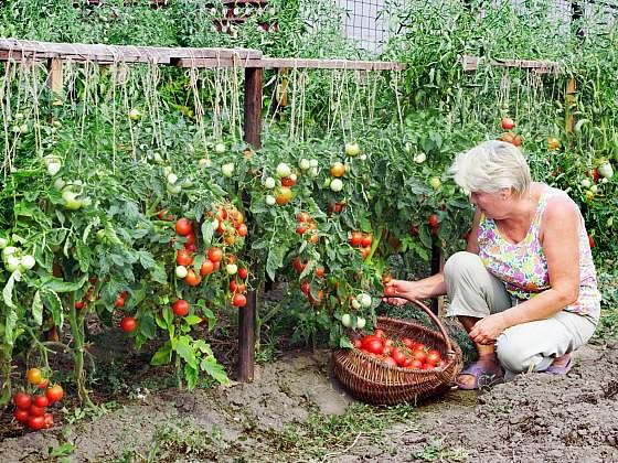 Stálý vysoký výnos a prevenci vyčerpání dosáhnete pravidelným střídáním plodin (Zdroj: Depositphotos)