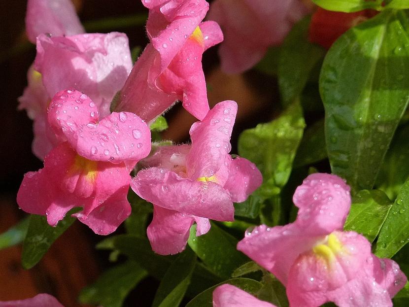 Jak pěstovat na balkoně květiny, i když se vám v tom alergie snaží zabránit 2