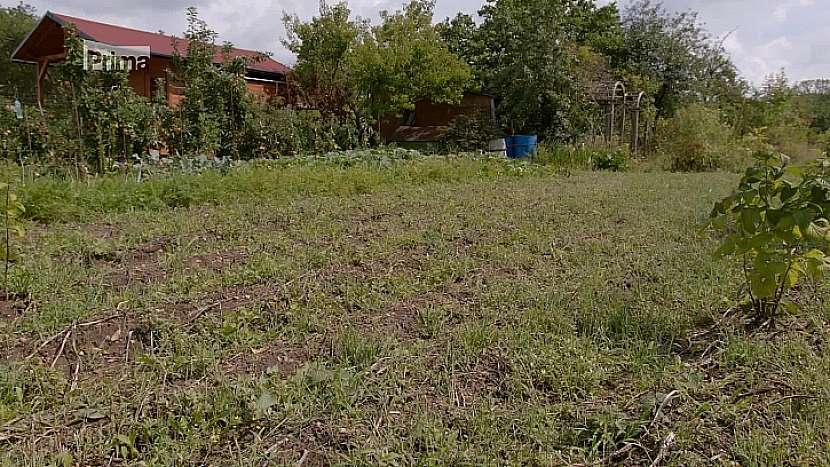 Plochu před sklizní hlíz brambor je nutné vyčistit od plevelů