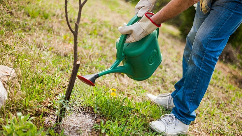 Předpověď počasí a zahrada:oživení mladých stromků
